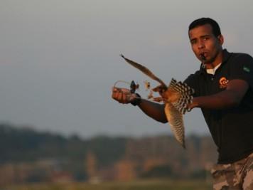 O Falcoeiro Juscelino Luís realizando o exercpicio de Lure-fly com Rá, o falcão.