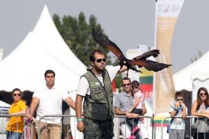 Bruno Silveira, durante demonstração com gavião-asa-de-telha, no Festival Internacional de Falcoaria em Abu Dhabi/UAE
