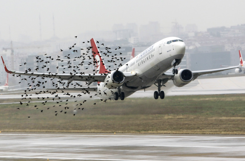 Fonte: http://www.vocativ.com/culture/science/birdstrikes-aircrashes-birds-air-disasters/